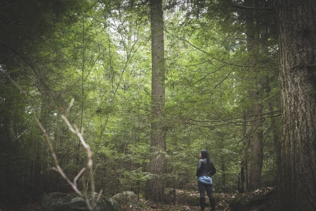 Woods7b