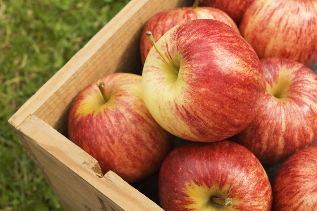 Gala apples from Demeritt Hill Farm in Lee, NH.