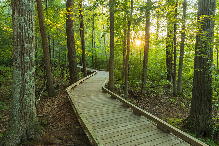 The Sun Shines Through The Trees Onto The Boardwalk At The Great Bay Discovery Center In Greenland, New Hampshire.