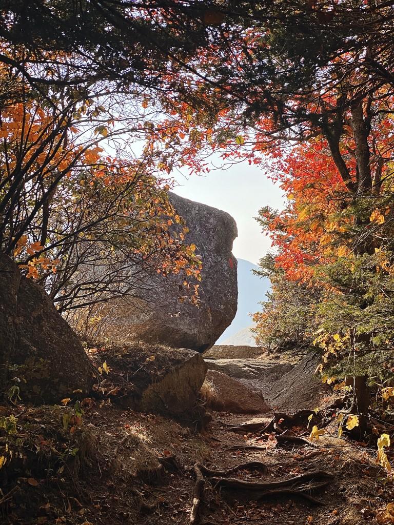 Artist Bluff Foliage