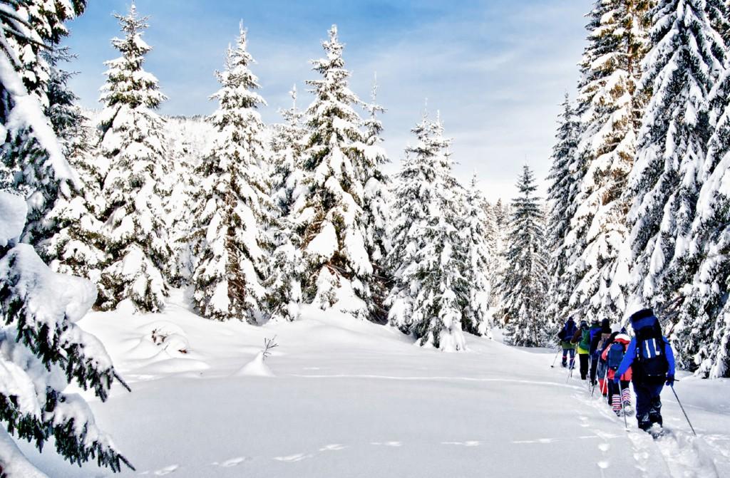 Snowshoelarge