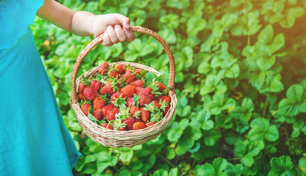 Strawberriespyo 1024x589